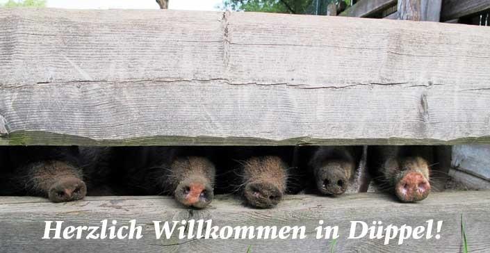 Willkommen in Düppel!
